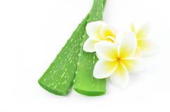 Aloe vera e plumeria Fotografie Stock Libere da Diritti