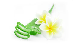 Aloe vera e plumeria Immagine Stock Libera da Diritti