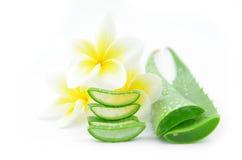 Aloe vera e plumeria Fotografie Stock