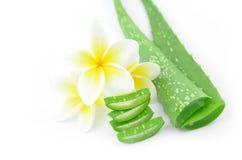 Aloe vera e plumeria Immagini Stock Libere da Diritti