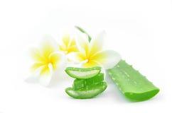 Aloe vera e plumeria Fotografia Stock Libera da Diritti