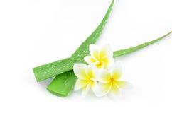 Aloe vera e plumeria Immagini Stock
