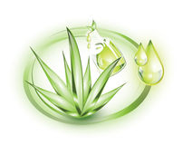 Aloe vera and extract. Aloe vera plant with extract from it in a bottle, in green circles
