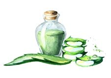 Aloe vera extract. Watercolor hand drawn illustrationю. Aloe vera extract. Watercolor hand drawn illustration Royalty Free Stock Image