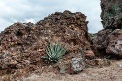 Aloe Vera Flower Against Rocky Formation in deserto Immagine Stock Libera da Diritti