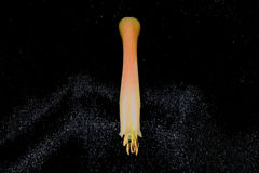 Aloe Vera Flower Macro 2. A macro of a tubular flower from an aloe vera plant Royalty Free Stock Photography