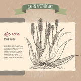 Aloe Vera flower and plant sketch. Placed on original handmade paper background texture. Green apothecary series. Great for traditional or Ayurvedic medicine Royalty Free Stock Photos