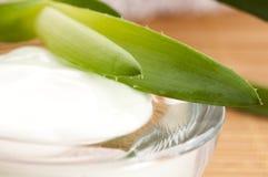 Aloe vera - fogli e crema di fronte Fotografia Stock