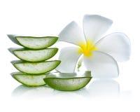 Aloe vera and frangipani flower Royalty Free Stock Photography