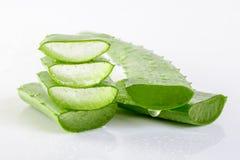 Aloe vera fresca Fotografia Stock Libera da Diritti