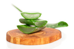 Aloe vera fresh leaf. Stock Image