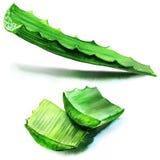 Aloe vera fresh leaf. isolated over white Royalty Free Stock Images