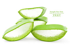 Aloe vera fresh leaf. Stock Image