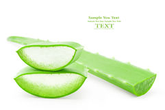 Aloe vera fresh leaf. Stock Images
