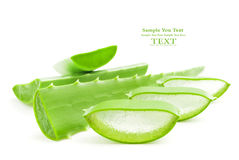 Aloe vera fresh leaf. Stock Photography