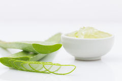Aloe vera fresh leaf  water can help neutralize free radicals Co Stock Images