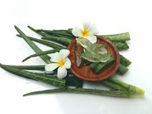 Aloe vera so fresh for spa and beauty on white background. Aloe vera so fresh for spa and beauty and plumeria flower on white background Royalty Free Stock Image