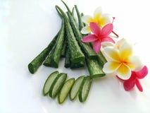 Aloe Vera so frisch für Badekurort und Schönheit auf weißem Hintergrund Stockfotografie
