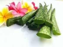 Aloe Vera so frisch für Badekurort und Schönheit auf weißem Hintergrund Stockbilder