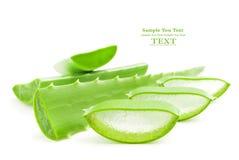 Aloe Vera-frisches Blatt Stockfotografie
