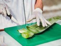 Aloe Vera Gel och klippt aloe Vera Leaves Aloe Vera stelnar n?stan bruk i mat-, medicin- och sk?nhetbransch royaltyfri bild