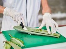 Aloe Vera Gel och klippt aloe Vera Leaves Aloe Vera stelnar n?stan bruk i mat-, medicin- och sk?nhetbransch arkivbild