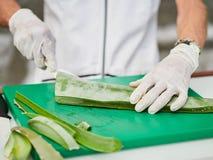 Aloe Vera Gel och klippt aloe Vera Leaves Aloe Vera stelnar n?stan bruk i mat-, medicin- och sk?nhetbransch royaltyfria bilder