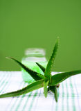 Aloe Vera Royalty Free Stock Image