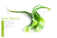 Aloe vera herbal medicine Royalty Free Stock Photo