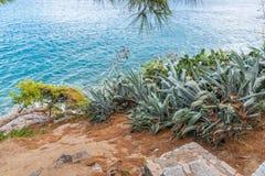 Aloe Vera on the hill. Mediterranean island with Aloe Vera on the hill with turquoise sea water in the background, Greece, Skiathos, 2018 stock image