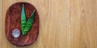 Aloe vera for homemade moisturizing cosmetics and natural logo, copyspace. Fresh organic aloe vera for homemade hydration and moisturizing cosmetics and natural Stock Photo