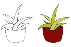 Aloe Vera Illustrazione isolata pianta da appartamento Pianta variopinta e coloritura Vaso ceramico Immagini Stock