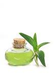Aloe vera isolata Immagine Stock