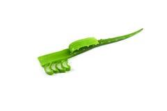 Aloe vera isolata Immagine Stock Libera da Diritti