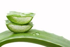 Aloe vera, isolata Fotografia Stock