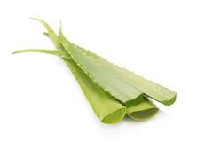 Aloe vera isolata su priorità bassa bianca Fotografia Stock
