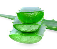 Aloe vera isolated Royalty Free Stock Photos