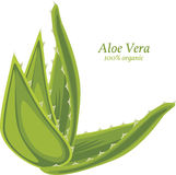 Aloe vera isolated on the white Royalty Free Stock Images