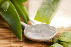 Aloe vera juice with fresh leaves Stock Images