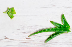 Aloe Vera Royalty Free Stock Photography