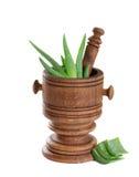 Aloe Vera Leaves Fotografia Stock