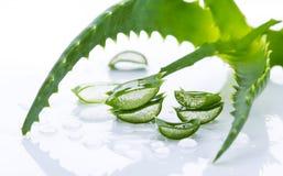 Aloe Vera Leaves Fotografie Stock Libere da Diritti