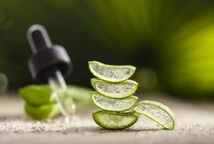 Aloe Vera Leaves Immagine Stock Libera da Diritti