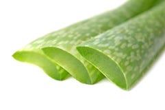 Aloe Vera Leaves Fotografia Stock Libera da Diritti