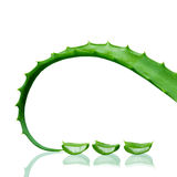 Aloe Vera leaves. With water drops  on white background Stock Images