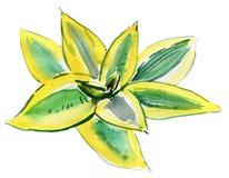 Aloe vera leaves . Watercolor Royalty Free Stock Photography
