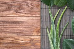 Natural organic concept with copy space. Aloe vera leaves on wooden table. Natural cosmetic ingredients with copy space. Fresh aloe vera plant on wooden board stock photos