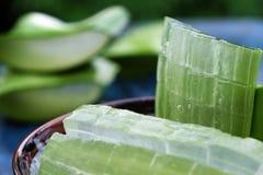 Aloe vera, medicina dell'erba Immagine Stock Libera da Diritti