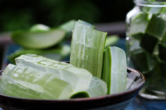 Aloe vera, medicina dell'erba Fotografie Stock