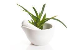 Aloe vera - medicina di erbe Fotografie Stock Libere da Diritti